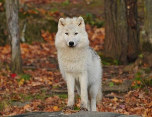 日本人のための基礎英語表現~一匹オオカミ~