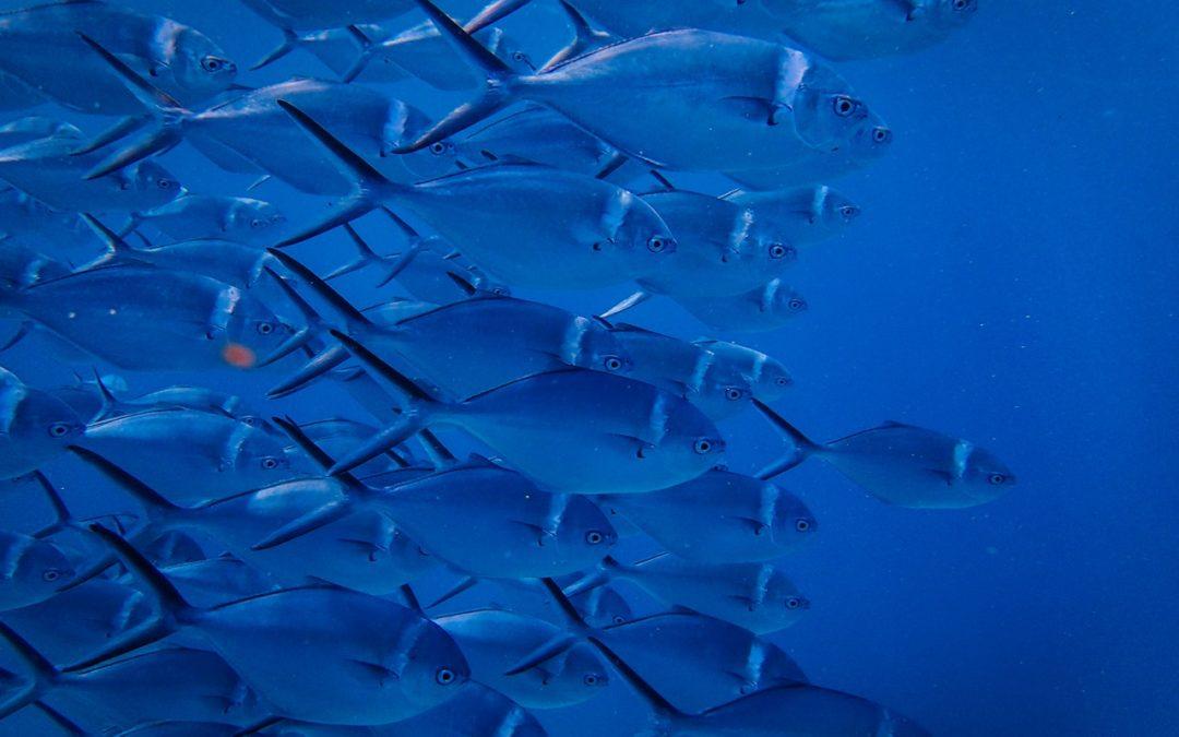 """日常で役立つ英語表現~励ましの言葉""""There are other fish in the sea""""~"""